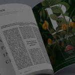 Diseño de catálogo de bodas para La Borraja